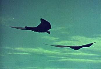rodan-flight