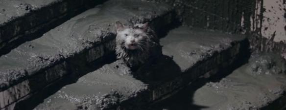 Godzilla_vs._Hedorah_-_Add_a_Cat_for_Dramatic_effect