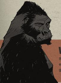 gorilla_wink