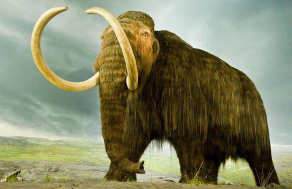 woolly-mammoth-standing.ngsversion.1460131402232.adapt.1900.1.jpg