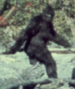 bigfoot-patterson-film